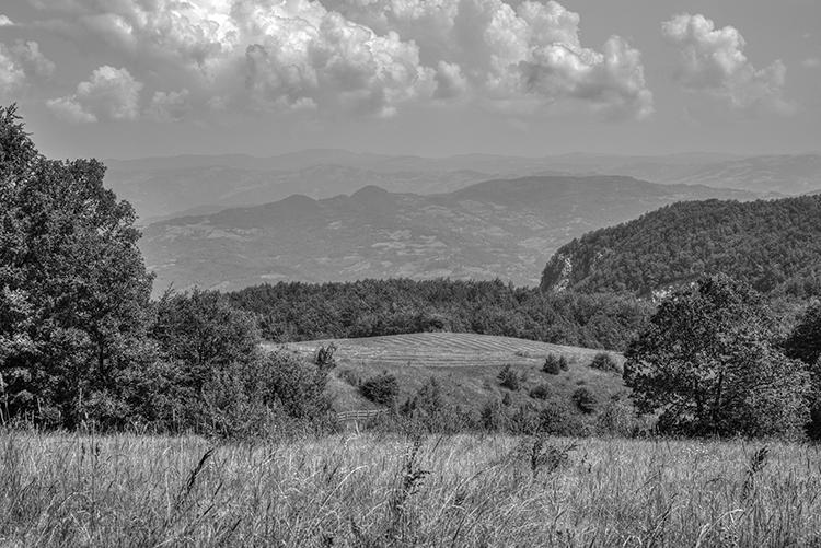 Copyright by Sanja Veljkovic